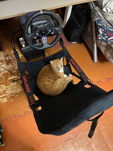 I love it, my cat loves it, it's great!
